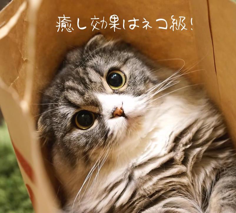 -shared-img-thumb-HIRA85_kamibukurokaraderesou_TP_V